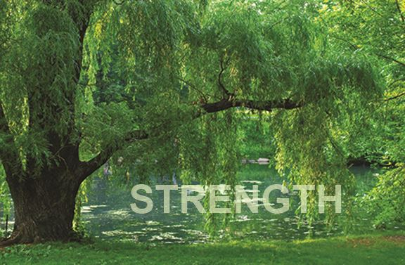 Photo of river bank and large willow tree with the word STRENGTH superimposed.